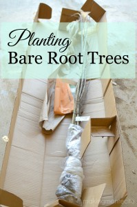 Planting Bare-Root Trees